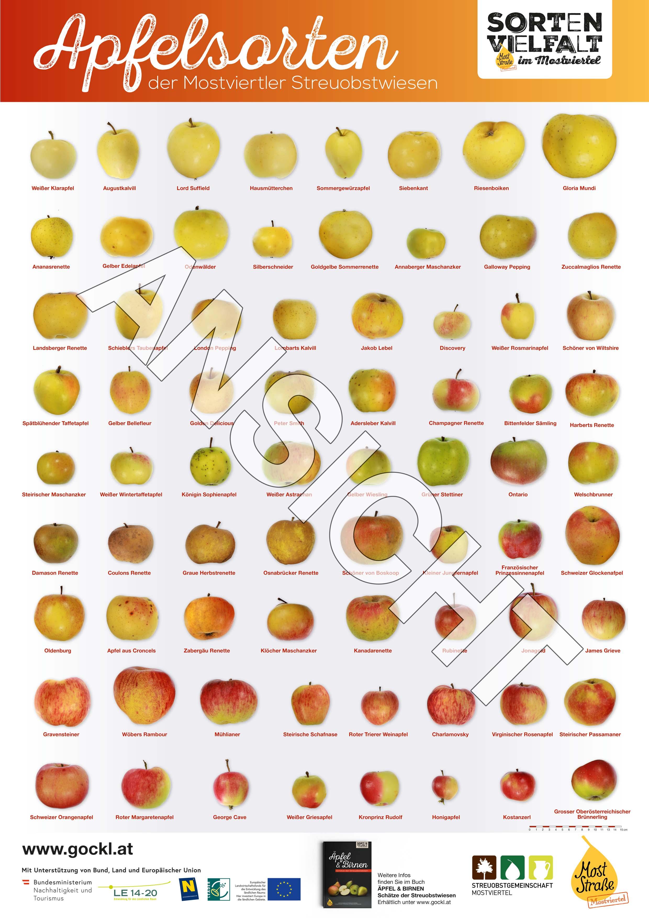 Foto: Sortenposter Ansicht Äpfel